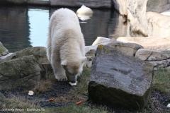 Zoo_Bremerhaven_220916_IMG_09909