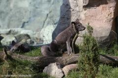 Zoo_Bremerhaven_220916_IMG_09626