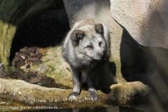 Zoo_am_Meer_Bremerhaven_280414_IMG_6814