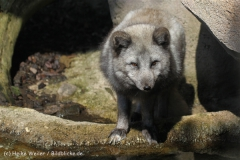 Zoo_am_Meer_Bremerhaven_280414_IMG_6817