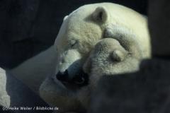 Zoo_am_Meer_Bremerhaven_280414_IMG_6826