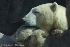 Zoo_am_Meer_Bremerhaven_280414_IMG_6854