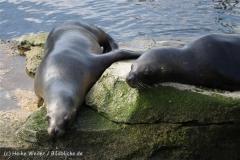 Zoo_am_Meer_Bremerhaven_280414_IMG_6902