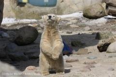 Zoo_am_Meer_Bremerhaven_280414_IMG_6915