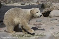 Zoo_am_Meer_Bremerhaven_280414_IMG_6919
