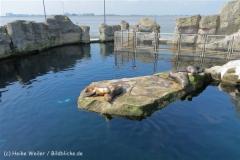 Zoo_am_Meer_Bremerhaven_280414_IMG_6929_4677