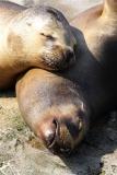 Zoo_am_Meer_Bremerhaven_280414_IMG_6933