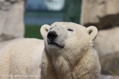 Zoo_am_Meer_Bremerhaven_280414_IMG_6940