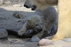 Zoo_am_Meer_Bremerhaven_280414_IMG_6954