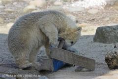 Zoo_am_Meer_Bremerhaven_280414_IMG_6969