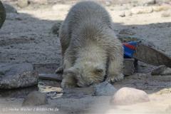 Zoo_am_Meer_Bremerhaven_280414_IMG_6985