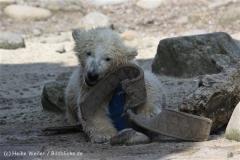 Zoo_am_Meer_Bremerhaven_280414_IMG_7005