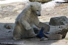 Zoo_am_Meer_Bremerhaven_280414_IMG_7008