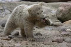 Zoo_am_Meer_Bremerhaven_280414_IMG_7490