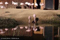 Zoo-Aschersleben-020410IMG_8754