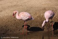 Zoo-Aschersleben-020410IMG_8759