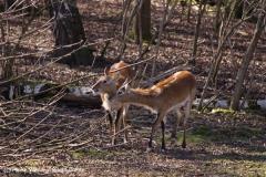 Zoo-Aschersleben-020410IMG_8765