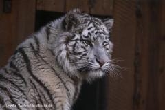 Zoo-Aschersleben-020410IMG_8860