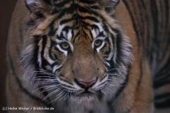 Zoo-Aschersleben-020410IMG_8865