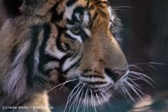 Zoo-Aschersleben-020410IMG_8871