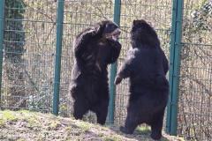 Zoo-Aschersleben-020410IMG_8901