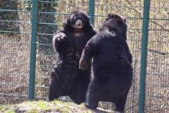 Zoo-Aschersleben-020410IMG_8905