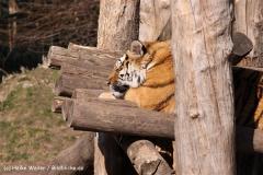 Zoo-Aschersleben-020410IMG_8921