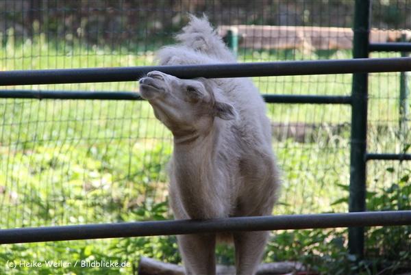 Zoo Aschersleben 030710-IMG_5869