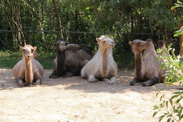 Zoo Aschersleben 030710-IMG_5872