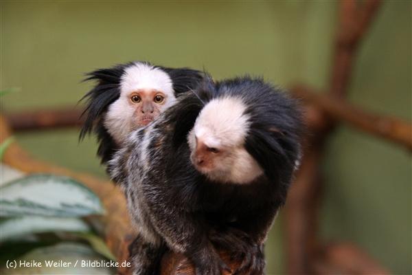 Zoo Aschersleben 030710-IMG_5908