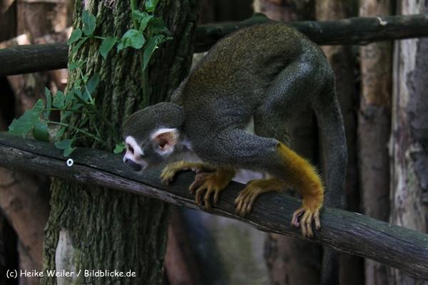 Zoo Aschersleben 030710-IMG_5929
