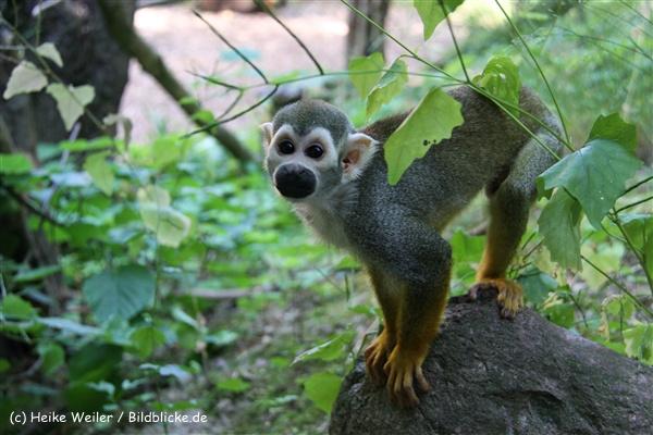 Zoo Aschersleben 030710-IMG_5973