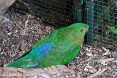 Zoo Aschersleben 030710-IMG_5798