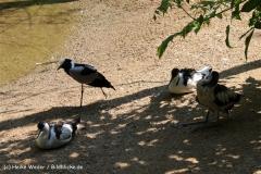 Zoo Aschersleben 030710-IMG_5814