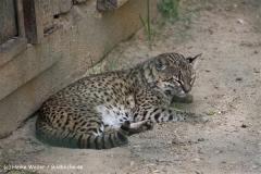 Zoo Aschersleben 030710-IMG_5822