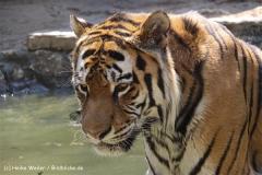 Zoo Aschersleben 030710-IMG_5840