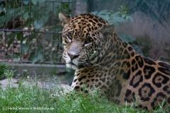 Zoo Aschersleben 030710-IMG_5858