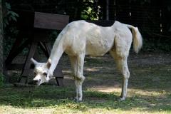 Zoo Aschersleben 030710-IMG_5881