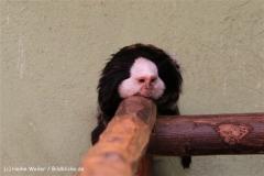 Zoo Aschersleben 030710-IMG_5924