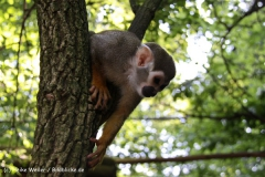 Zoo Aschersleben 030710-IMG_5936