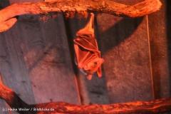 Zoo Aschersleben 030710-IMG_5977