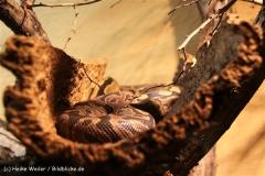 Zoo Aschersleben 030710-IMG_5994