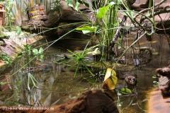 Zoo Aschersleben 030710-IMG_6001