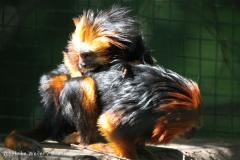 Zoo_Aschersleben_080814_copy_Heike_Weiler_IMG_4613