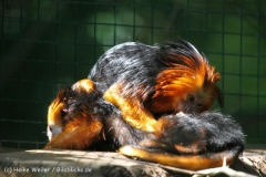 Zoo_Aschersleben_080814_copy_Heike_Weiler_IMG_4622