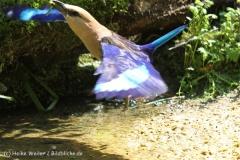 Zoo_Aschersleben_080814_copy_Heike_Weiler_IMG_4645