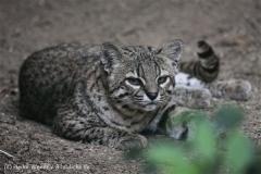 Zoo_Aschersleben_080814_copy_Heike_Weiler_IMG_4666