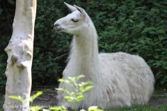 Zoo_Aschersleben_080814_copy_Heike_Weiler_IMG_4677