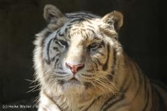 Zoo_Aschersleben_080814_copy_Heike_Weiler_IMG_4728