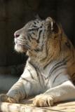 Zoo_Aschersleben_080814_copy_Heike_Weiler_IMG_4736